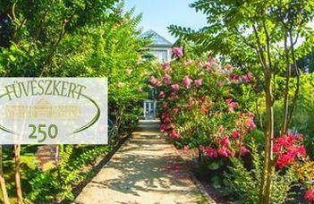 Summer at ELTE Botanical Garden