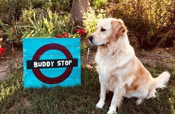 Buddy stop – Villámgyors segítség hallgatóktól hallgatóknak