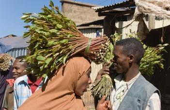Kát: egy afrikai kábítószer pályafutása az arab világban
